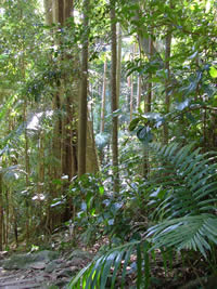 The Channon: Subtropical Rainforest